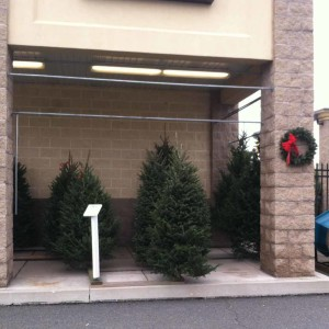 Real-Christmas-Trees-Weavers-Ace-Hardware-at-Douglassville
