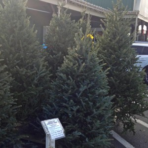 Real-Christmas-Trees-for-Sale-Weavers-Ace-Hardware-at-Fleetwood