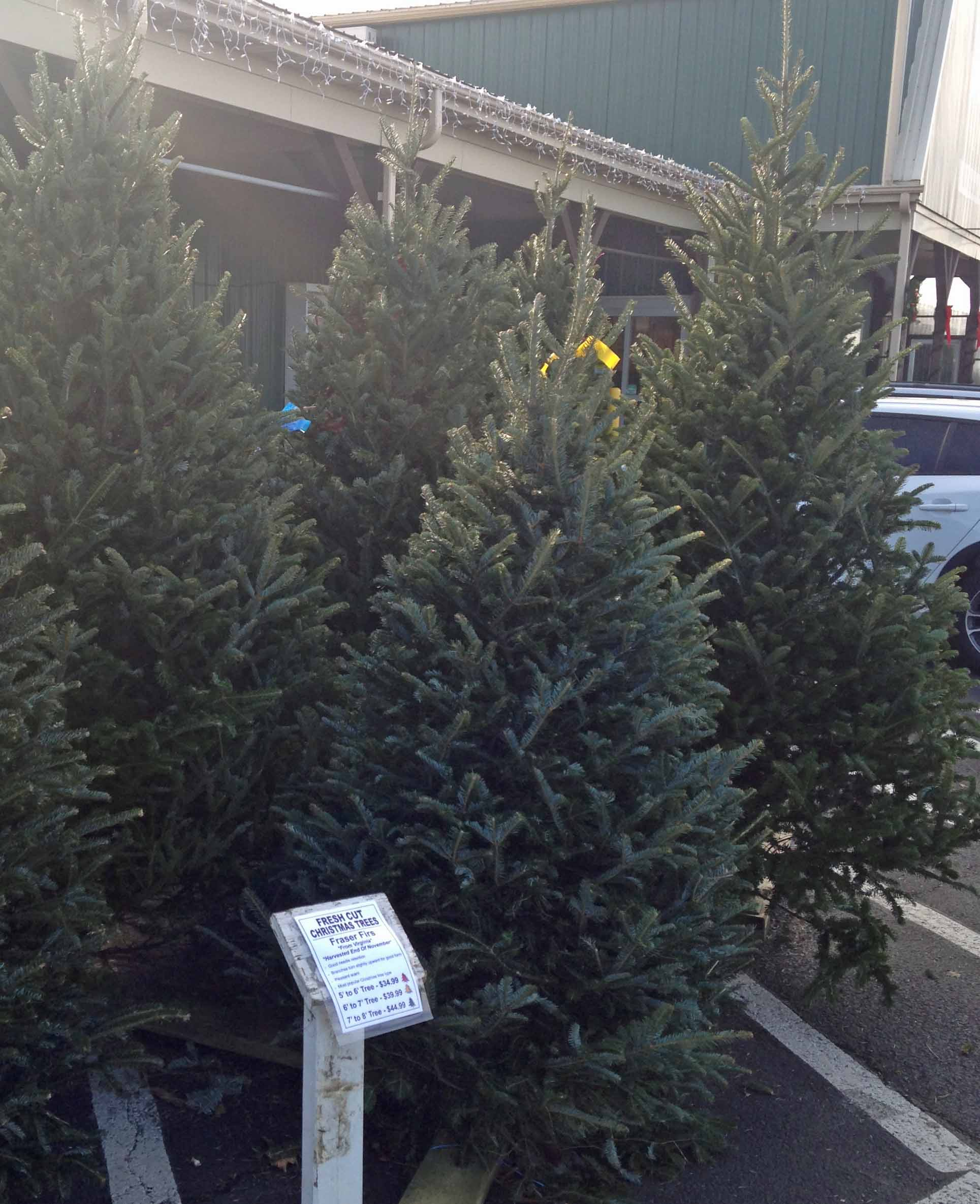 real christmas trees for sale weavers ace hardware - Lowes Christmas Tree Sale